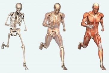 Zanimljive činjenice o našem telu